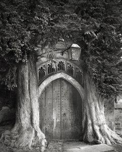 古樹是我們這個星球上最古老的遺蹟