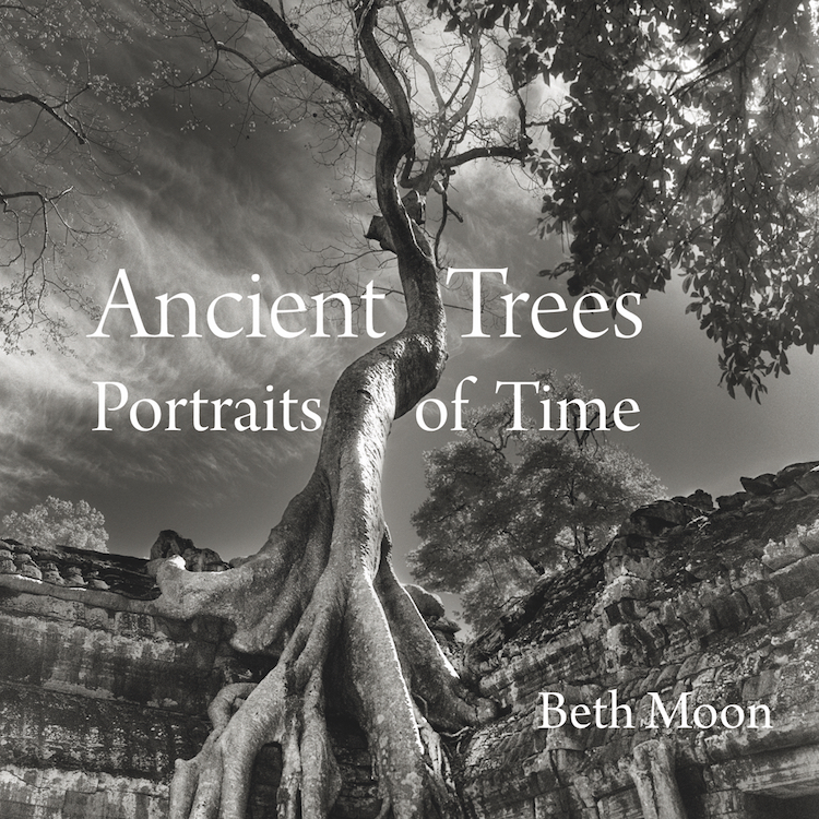 o-ancient-trees