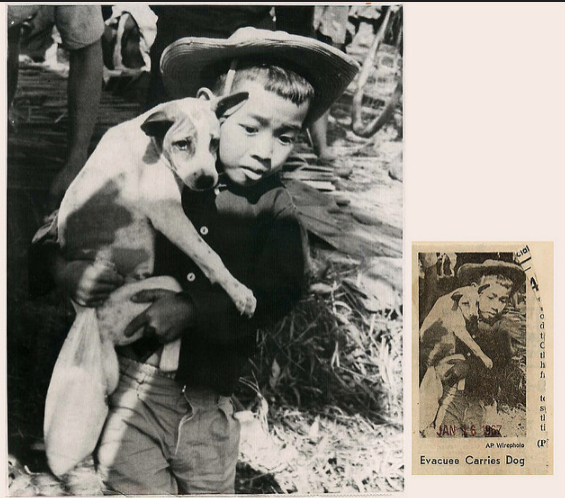 戰火中的孩子和小狗