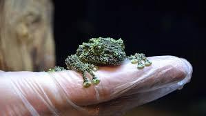 有幾隻蛙嗎4