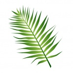 leaf-clipart