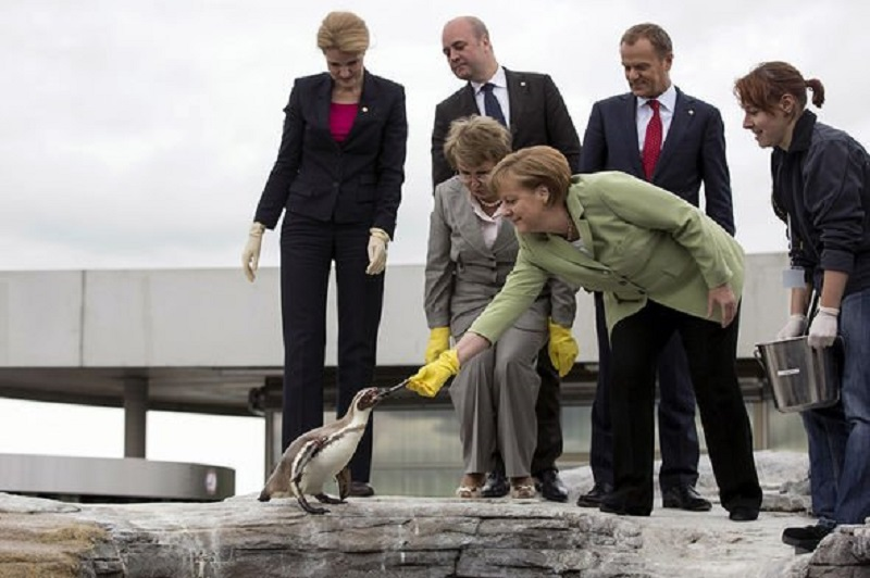 Angela-Merkel-feeds-penguin-3666150